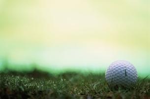 芝生の上の1個のゴルフボールの写真素材 [FYI03831615]