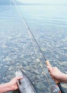 釣った魚の写真素材 [FYI03831628]