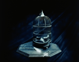 複数の白い羽と鳥かご1個(B&W)の写真素材 [FYI03831650]