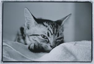 ネコの写真素材 [FYI03831781]