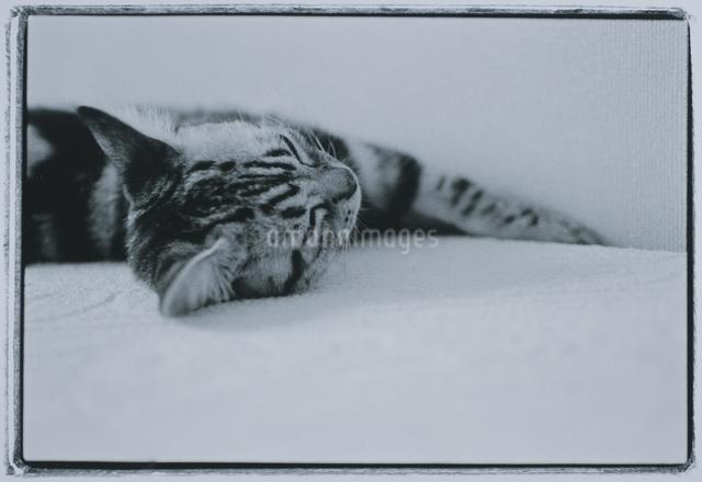 ネコの写真素材 [FYI03831782]