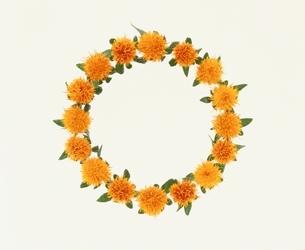 紅花の写真素材 [FYI03831802]