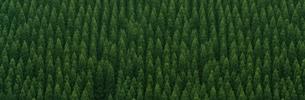 森林風景 宮崎県の写真素材 [FYI03832497]