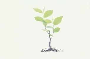 植物の写真素材 [FYI03832732]