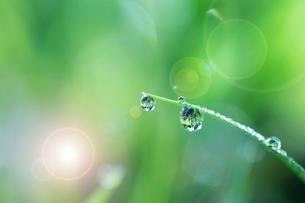 葉の水滴の写真素材 [FYI03832818]