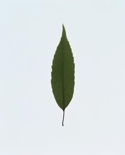 葉の写真素材 [FYI03833319]