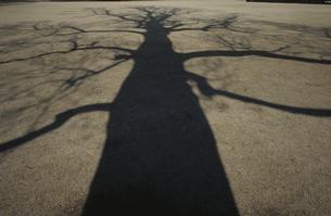 地面に映る樹木の影の写真素材 [FYI03833458]