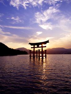 厳島神社大鳥居の夕景の写真素材 [FYI03834110]