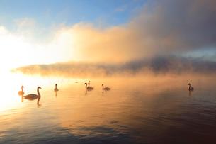 朝もやの山中湖と白鳥の写真素材 [FYI03834314]