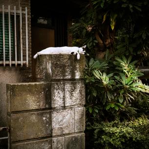 昼寝をする猫の写真素材 [FYI03834435]