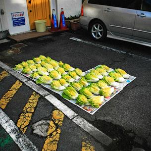 路上に置かれた白菜の写真素材 [FYI03834446]