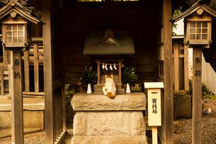 猫のお参りの写真素材 [FYI03834479]