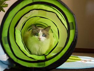 遊具の中の子猫の写真素材 [FYI03834481]