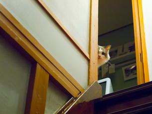 覗く猫の写真素材 [FYI03834485]