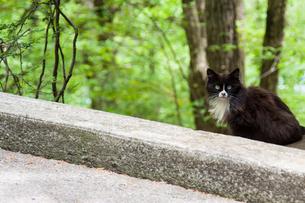 野良猫の写真素材 [FYI03834503]