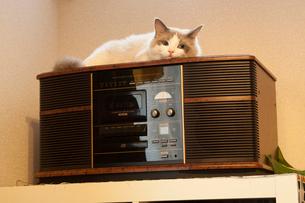 オーディオの上にいる子猫の写真素材 [FYI03834509]