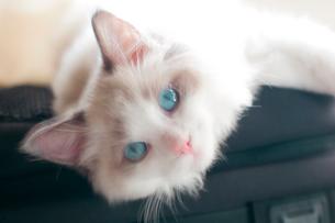 見つめる青い瞳の写真素材 [FYI03834516]