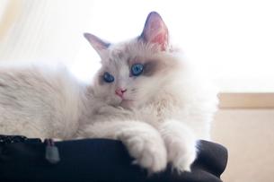 寛ぐ子猫の写真素材 [FYI03834519]