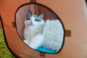 遊具のなかの子猫の写真素材 [FYI03834531]