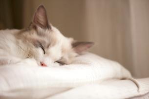 眠る子猫の写真素材 [FYI03834533]