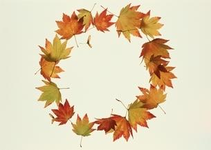 円形に重なる紅葉の葉 秋の写真素材 [FYI03835225]