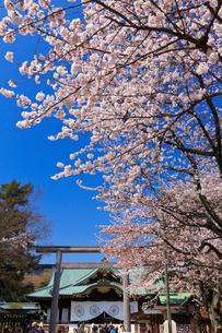 桜咲く靖国神社の写真素材 [FYI03835336]