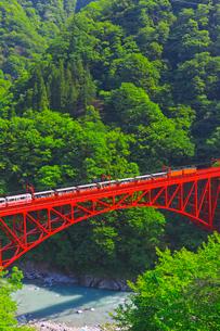 新緑の黒部渓谷鉄道 トロッコ列車の写真素材 [FYI03835674]