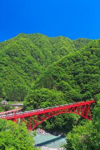 新緑の黒部渓谷鉄道 トロッコ列車の写真素材 [FYI03835681]