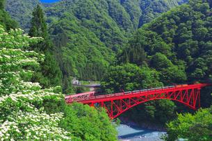 新緑の黒部渓谷鉄道 トロッコ列車の写真素材 [FYI03835682]