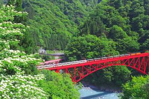 新緑の黒部渓谷鉄道 トロッコ列車の写真素材 [FYI03835683]