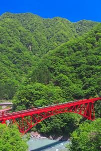 新緑の黒部渓谷鉄道 トロッコ列車の写真素材 [FYI03835684]