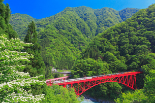 新緑の黒部渓谷鉄道 トロッコ列車の写真素材 [FYI03835685]