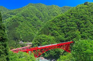 新緑の黒部渓谷鉄道 トロッコ列車の写真素材 [FYI03835686]