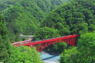 新緑の黒部渓谷鉄道 トロッコ列車の写真素材 [FYI03835687]