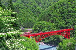 新緑の黒部渓谷鉄道 トロッコ列車の写真素材 [FYI03835688]