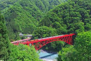 新緑の黒部渓谷鉄道 トロッコ列車の写真素材 [FYI03835689]