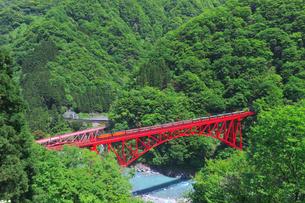 新緑の黒部渓谷鉄道 トロッコ列車の写真素材 [FYI03835690]
