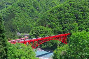新緑の黒部渓谷鉄道 トロッコ列車の写真素材 [FYI03835691]