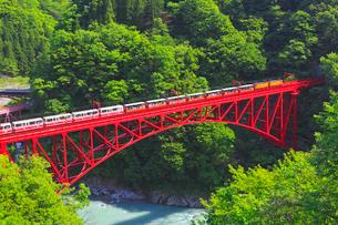 新緑の黒部渓谷鉄道 トロッコ列車の写真素材 [FYI03835692]