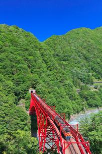 新緑の黒部渓谷鉄道 トロッコ列車の写真素材 [FYI03835697]