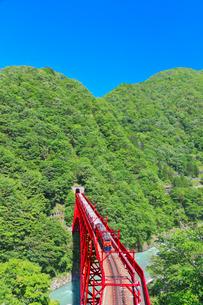 新緑の黒部渓谷鉄道 トロッコ列車の写真素材 [FYI03835698]