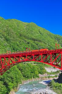 新緑の黒部渓谷鉄道 トロッコ列車の写真素材 [FYI03835706]