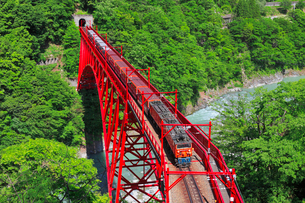 新緑の黒部渓谷鉄道 トロッコ列車の写真素材 [FYI03835707]