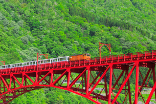 新緑の黒部渓谷鉄道 トロッコ列車の写真素材 [FYI03835708]
