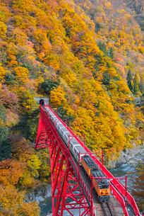 黒部峡谷鉄道 新山彦橋とトロッコ電車の写真素材 [FYI03835975]