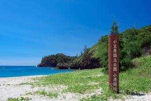 小笠原父島の小港園地の写真素材 [FYI03836143]