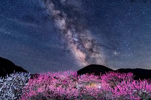 花桃の里と天の川の写真素材 [FYI03836292]
