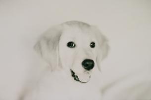 犬の写真素材 [FYI03836890]