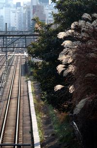 線路 東京都の写真素材 [FYI03836984]