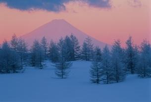 冬の早朝の富士山と木立の写真素材 [FYI03837008]